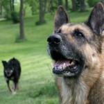 Chicago. Кучето Андра в двора на Вальо и Нели. Снимка: Иван Бакалов