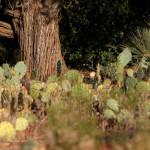 Sedona_cactusi-2f